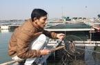 Quảng Ninh: Ngành chức năng vào cuộc tìm nguyên nhân hàng tấn cá song, cá giò chết bất thường