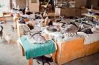 Khám phá thiên đường của hàng nghìn chú mèo vô gia cư