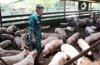 """TP.HCM: Nông nghiệp """"đụng"""" phải năm khó khăn, bất ngờ giá trị sản xuất đạt hơn 23.481 tỷ đồng"""