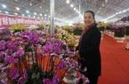 """Hà Nội: Lan hồ điệp Đà Lạt """"đổ bộ"""", dân Thủ đô sẵn sàng chi tiền triệu mua về trưng Tết Tân Sửu"""