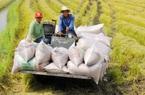 Giá nông sản hôm nay 27/1: Lợn hơi miền Bắc giảm sâu, giao dịch lúa gạo sôi động