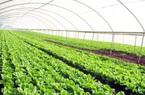 Hạn mức giao đất nông nghiệp năm 2021 mới nhất
