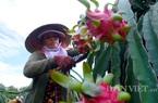 Bộ NNPTNT đặt tham vọng xuất khẩu rau quả lọt 5 nước hàng đầu thế giới, đạt 8-10 tỷ USD