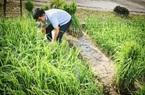 """Bến Tre: Quảng bá du lịch dịp Tết, bất ngờ với tiểu cảnh ruộng lúa, con trâu, cây rơm, chòi tranh-toàn """"đặc sản"""" quê nhà"""