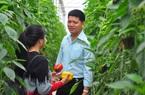 """Giá ớt tăng cao, một ông nông dân """"tay ngang"""" tỉnh Lâm Đồng mỗi tháng cắt bán 50 tấn ớt, doanh thu 1,5 tỷ đồng"""