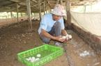 Nhiều mô hình hay giúp nông dân vượt khó, làm giàu