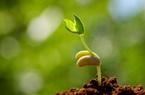 3 tỉnh được cấp miễn phí hàng trăm tấn hạt giống