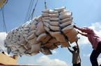 Giá gạo Việt xuất khẩu lại lập kỉ lục mới