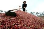 Giá nông sản hôm nay (4/1): Cà phê tín hiệu tích cực, lợn hơi vẫn tiếp tục tăng