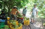 Sầu riêng ngày càng được ưa chuộng nhờ kiểm soát lượng đường, giảm nguy cơ ung thư, cơ hội cho Việt Nam