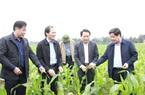 Nỗ lực khắc phục hậu quả thiên tai, cây trái, rau màu đã phủ xanh đồng đất Hà Tĩnh, Quảng Bình