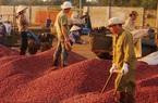 Giá nông sản hôm nay (6/1): Cà phê giảm, lợn hơi tăng - giảm trái chiều
