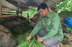 """Cao Bằng: Hơn 5.400 mô hình được Quỹ Hỗ trợ nông dân """"tiếp sức"""""""
