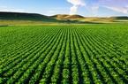 Thu hồi đất nông nghiệp, cán bộ công chức có được bồi thường?