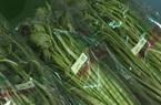 Kiên Giang: Phát triển nhãn hiệu tập thể rau cần nước Tân Hiệp