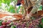 Giá nông sản hôm nay (7/1): Cà phê ghi nhận phiên giảm thứ 3 liên tiếp từ đầu năm 2021