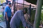 Lão nông Cần Thơ 62 tuổi quyết tâm làm giàu, tự nguyện trả lại sổ hộ nghèo