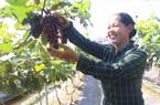 Hơn 12.000 hội viên, nông dân Thủ đô được tiếp vốn