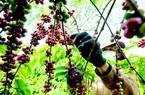 Bộ NNPTNT tham vọng đưa Việt Nam lọt top 15 nước nông nghiệp mạnh nhất thế giới