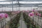 """Yên Bái: Vườn lan Hồ Điệp """"khủng"""" với 100.000 giò hoa lan đẹp mê li, bất ngờ nhất là thuê chuyên gia Israel sang trồng"""