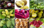 Xuất khẩu đầu năm 2021: Tín hiệu vui từ thị trường nông sản
