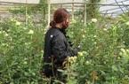 """Lâm Đồng: Vì sao nông dân ở nơi này tính chuyện """"ăn Tết"""" ngoài vườn hoa, hỏi ra nhiều người quan ngại"""