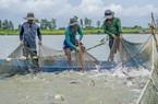 Nhiều lô cá tra bị Campuchia trả về, Bộ Công Thương nói gì?