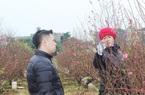 Covid-19 ập đến, hoa đào không ai mua, UBND thành phố Hải Dương kêu gọi mua ủng hộ dân
