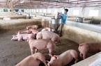 Ngành chăn nuôi - một năm bứt phá