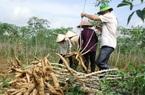 Dịp Tết, Trung Quốc tăng tiêu thụ thứ này, loại nông sản bình dân bỗng được giá