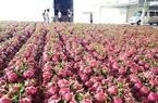 Đầu xuân năm mới, 160 tấn thanh long trồng ở tỉnh Long An xuất khẩu thành công qua cửa khẩu quốc tế nào?