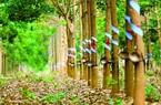 Loại nông sản gì phải cạnh tranh vị trí với Thái Lan ở thị trường Trung Quốc?