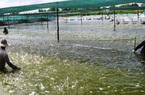 Đầu tư hệ thống cấp nước biển sạch nuôi tôm công nghệ cao
