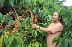 """Đắk Lắk: Vừa là tỷ phú nông dân, vừa là """"nữ"""" thủ lĩnh đưa buôn làng khá giả"""