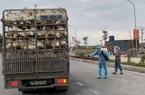 700.000 con gà cần bán gấp, Hải Dương mong các tỉnh tạo điều kiện vận chuyển