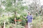 """""""Vua"""" của loài cây quý hơn vàng ở Bình Phước tiết lộ """"trúng số độc đắc"""" với rừng toàn cây quý giá trăm tỷ"""