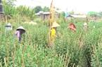 Không e ngại ảnh hưởng dịch bệnh covid, chàng nông dân vẫn đầu tư cả tỷ đồng trồng hoa bán tết