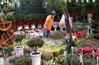 Những thủ đoạn lừa, người tiêu dùng cần tránh khi mua cây cảnh ngày tết