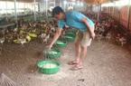 Tiếp vốn ưu đãi giúp nông dân thủ đô đầu tư chăn nuôi, trồng trọt vươn lên khá giả