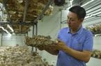 Một ông nông dân Hà Nội sang tận Hàn Quốc học trồng thứ cây này, giờ mỗi năm doanh thu 40 tỷ đồng