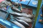 """Bình Định quyết tâm khắc phục """"thẻ vàng"""" thủy sản ngay từ cảng cá"""