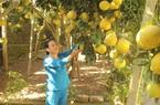 Hoà Bình: Phát triển nông nghiệp gắn với thị trường tiêu thụ