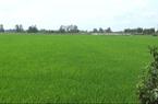 """Bắc Ninh: """"Đất lúa non"""" không sổ đỏ đắt không ngờ, giá đất nông nghiệp ở mức cao"""