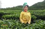 Lai Châu: Hình thành nhiều vùng sản xuất hàng hóa tập trung