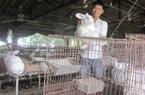 Kinh nghiệm nuôi 3.000 thỏ lãi 700 triệu đồng/năm