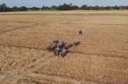 """Lão nông hơn 50 năm gìn giữ truyền thống nuôi """"sức kéo"""" cho nông nghiệp"""