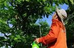 Lạng Sơn: Sáng chế bình thụ phấn cho na của 4 thầy giáo làng bất ngờ khiến nông dân xem mê tít