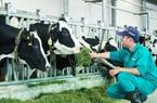 Bên thềm năm Tân Sửu bàn chuyện tăng tốc phát triển đàn đại gia súc