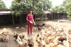 Hưng Yên: Nguồn vốn từ Quỹ Hỗ trợ nông dân đang giúp nhiều hộ hội viên nuôi con đặc sản, trồng cây đặc sản