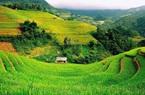Mẫu đơn xin thuê đất nông nghiệp năm 2021